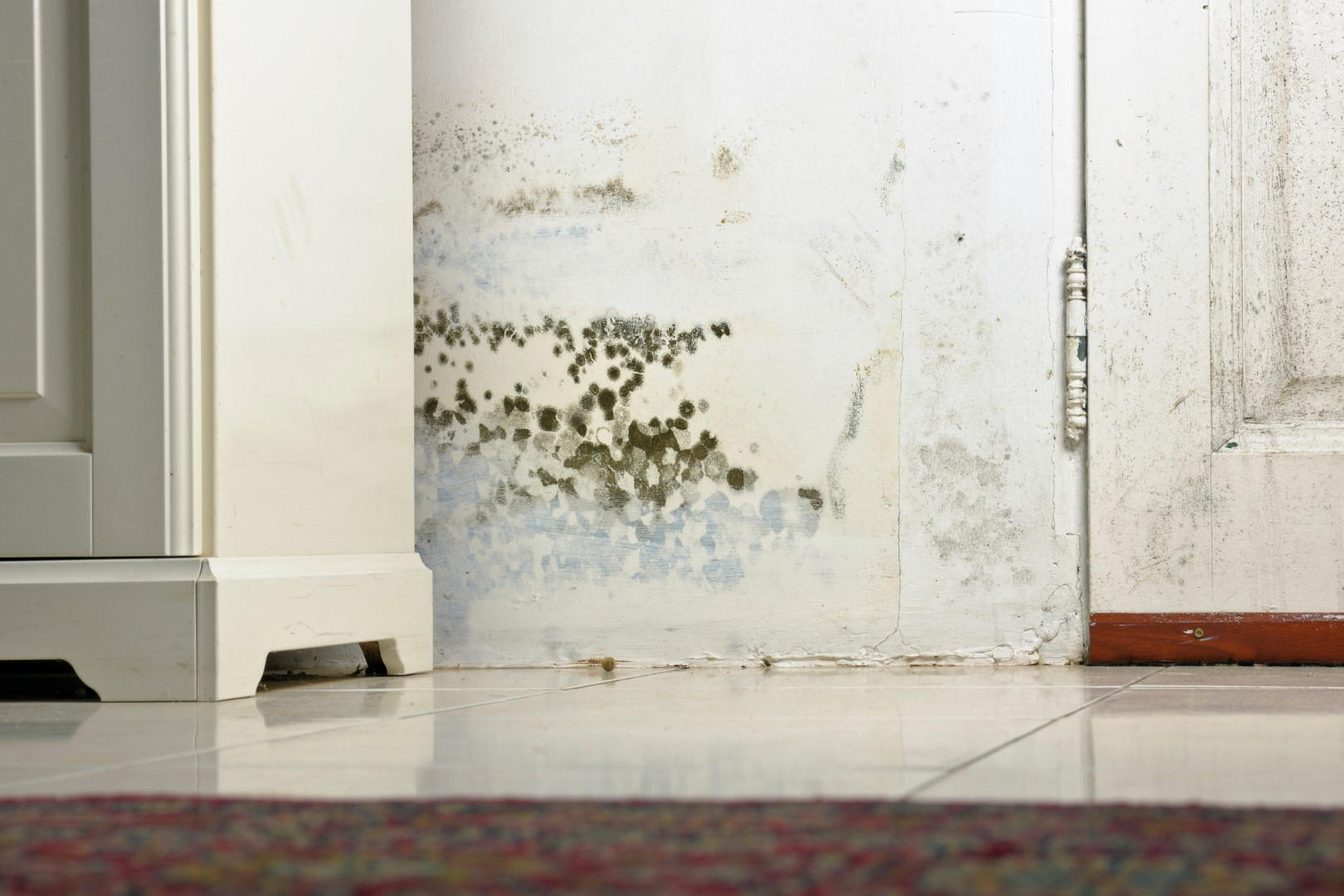 mould and stains on damp wall