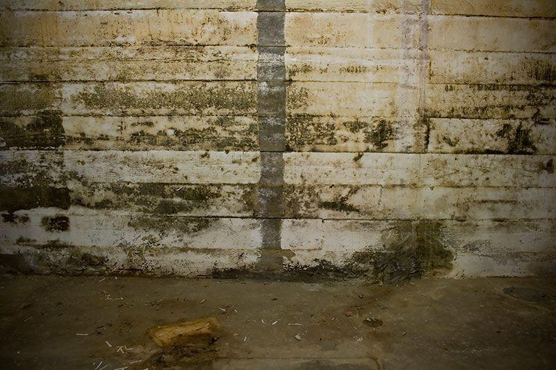 mould and rotting basement
