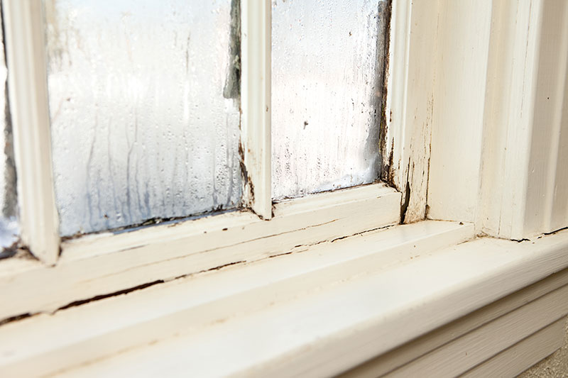 Dry rot in a window - North Yorkshire Remedials